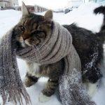 Незабаром у Тернополі буде дуже холодно