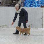 Тернополяни на ковзанці катають навіть собак (відео)