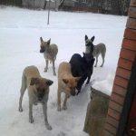 Понад 1200 тернополян покусали собаки