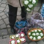Тернопільські бабусі нищать рідкісні рослини