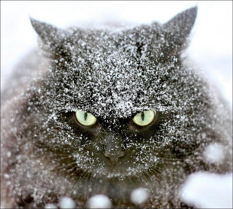кіт серед снігу