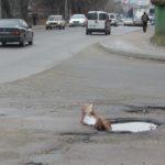 Тернопільські водії рятуються, як можуть (фото)