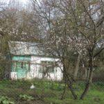 У Тернополі вже цвітуть дерева (фото)