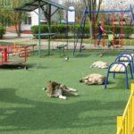 У Тернополі бездомні собаки окупували дитячий майданчик (фото)
