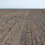 Агрохолдинг «МРІЯ» знову сіє цукровий буряк