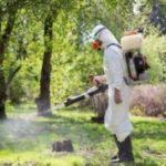 Що за «біле братство» можна побачити цими днями у тернопільських парках