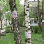 Щоб вберегти дерева від знищення, тернополяни почали їх нумерувати (фото)