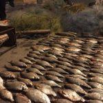 Навіть повірити важко, що у тернопільському озері ще є стільки риби