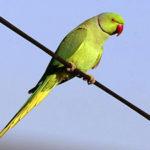 У Тернополі ніхто не цікавиться папугами, які втекли від господарів