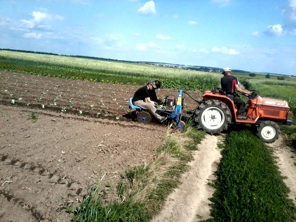 капуста трактор 3