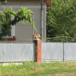 Як домашні тварини на Тернопільщині переносять спеку