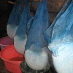 Тернополянка «помстилася» бабусі на ринку за кислий сир