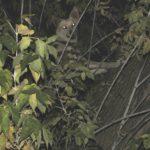 У Тернополі  є собака, який лазить по деревах (фото)