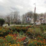 Де у Тернополі ще масово цвітуть останні квіти (фото)
