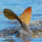 У жовтні Тернопільський рибоохоронний патруль виявив 33 порушення