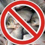 У яких ямах Тернопільським рибалкам заборонено ловити рибу