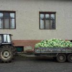 Співачка з Тернопільщини зберігає капусту у панській ґуральні