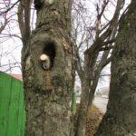 Що тернополяни ховають у дуплах дерев (фото)