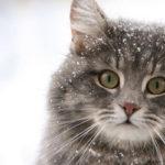 Тернополянин поетично розповів про важку долю бродячих тварин