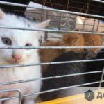 Щоранку у Тернополі викидають мертвих тварин