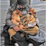 Тернополянка доволі різко висловилася щодо ситуації з бездомними тваринами