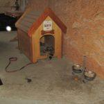 Найщасливішого сторожового собаку Тернополя звати Вася (фото)