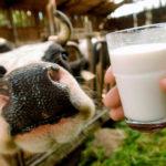 Скоро у селах Тернопільщини корова стане дуже рідкісною твариною