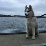 У Тернополі хтось викрадає великих молодих собак? (фото)