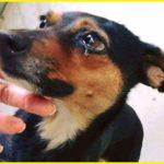 У соцмережі показали, як отруюють собак на Тернопільщині