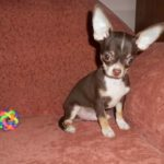 Тернополянам за догляд за собачкою пропонують дві місячні зарплати (фото)