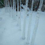 Житель Тернопільщини у своєму саду вирощує… бурульки (фото)