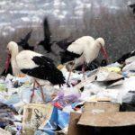 На Тернопільщину уже прилетіли лелеки – екологи просять рятувати їх від холоду і собак