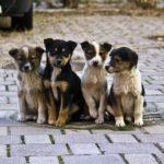 У райцентрі на Тернопільщині доволі дорого оцінили безпритульних тварин