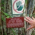 Скоро у Тернополі почнуть висаджувати дерева, до яких навіть наблизитися дуже небезпечно