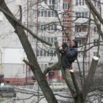У Тернополі дерева обрізає справжній Тарзан (фото)