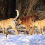 Жителі міст ночами викидають собак і котів у селах Тернопільщини