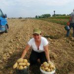 Відома співачка з Тернопільщини не соромиться продавати елітну картоплю