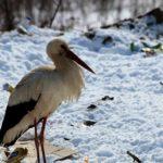 Жителі Тернопільщини іноді рятують від холоду не тих птахів