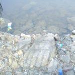 Хто насправді винен, що Тернопіль – таке брудне місто (фото)