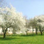 Тернопіль цвіте і пахне (фото)