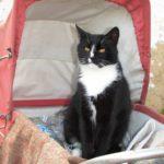 Квітневі коти надихають тернополянина вгадувати їх спів