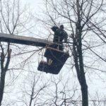 У Тернополі ніяк не можуть визначитися – чи проводити санітарне обрізування дерев