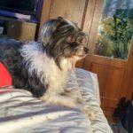 Розповідь про бездомну собаку з Тернополя, якій дуже пощастило у житті (фото)