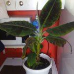 Через комунальників у квартирах Тернополя комфортно почувають себе лише кактуси