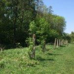 Тернополянка з допомогою паркану пропонує вберегти дітей від небезпечної рослини (фото)
