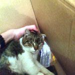У Тернополі збирають гроші на інвалідний візок для кота з переламаним хребтом