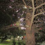 У Тернополі хтось у незвичний спосіб прикрашає ялинку (фото)