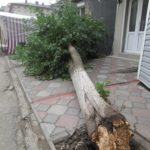 У райцентрі на Тернопільщині посеред базару впало дерево (фото)
