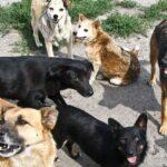 Бродячі собаки у селах Тернопільщини роздирають домашніх тварин