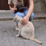Райцентр на Тернопільщині славиться не лише пам'ятками архітектури, а й котами (фото)